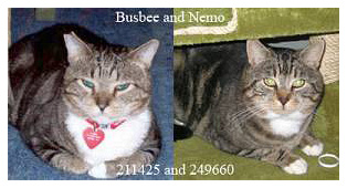 Busbee and Nemo