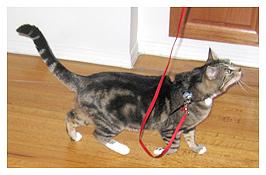 Walking on leash