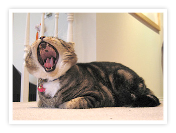 Nemo yawning